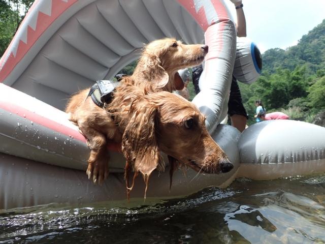 划船有夠累-毛孩星球醜萌大戰