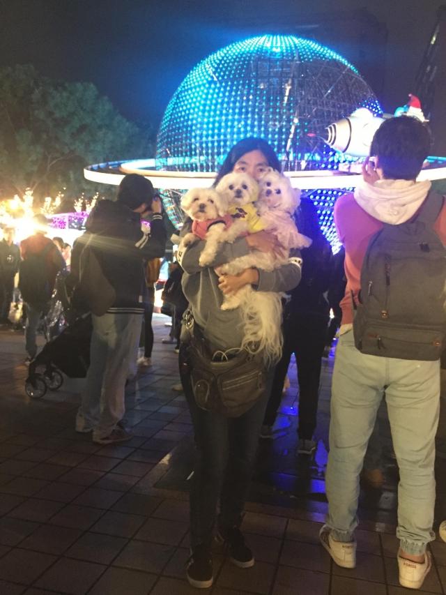 2018三寶到新北耶誕城囉~-2018毛寶貝幸福耶誕趴~毛爸媽與毛寶貝甜蜜放閃網路人氣票選