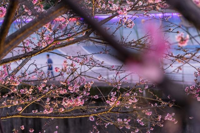 遇見你的美-2019樂活夜櫻季告白櫻花攝影大賽