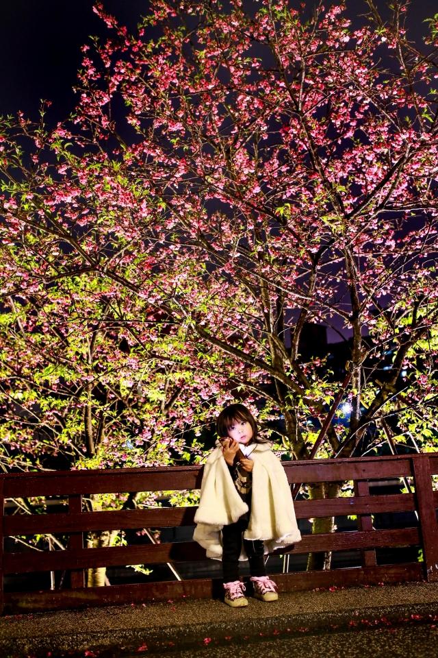 櫻與娃-2019樂活夜櫻季告白櫻花攝影大賽